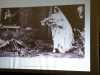 slide showing a bride leaving her bombed out house gor her wedding, November 1940