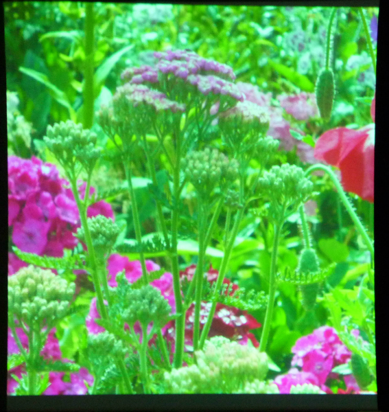 Ruth Isset\'s garden is a source of inspiration