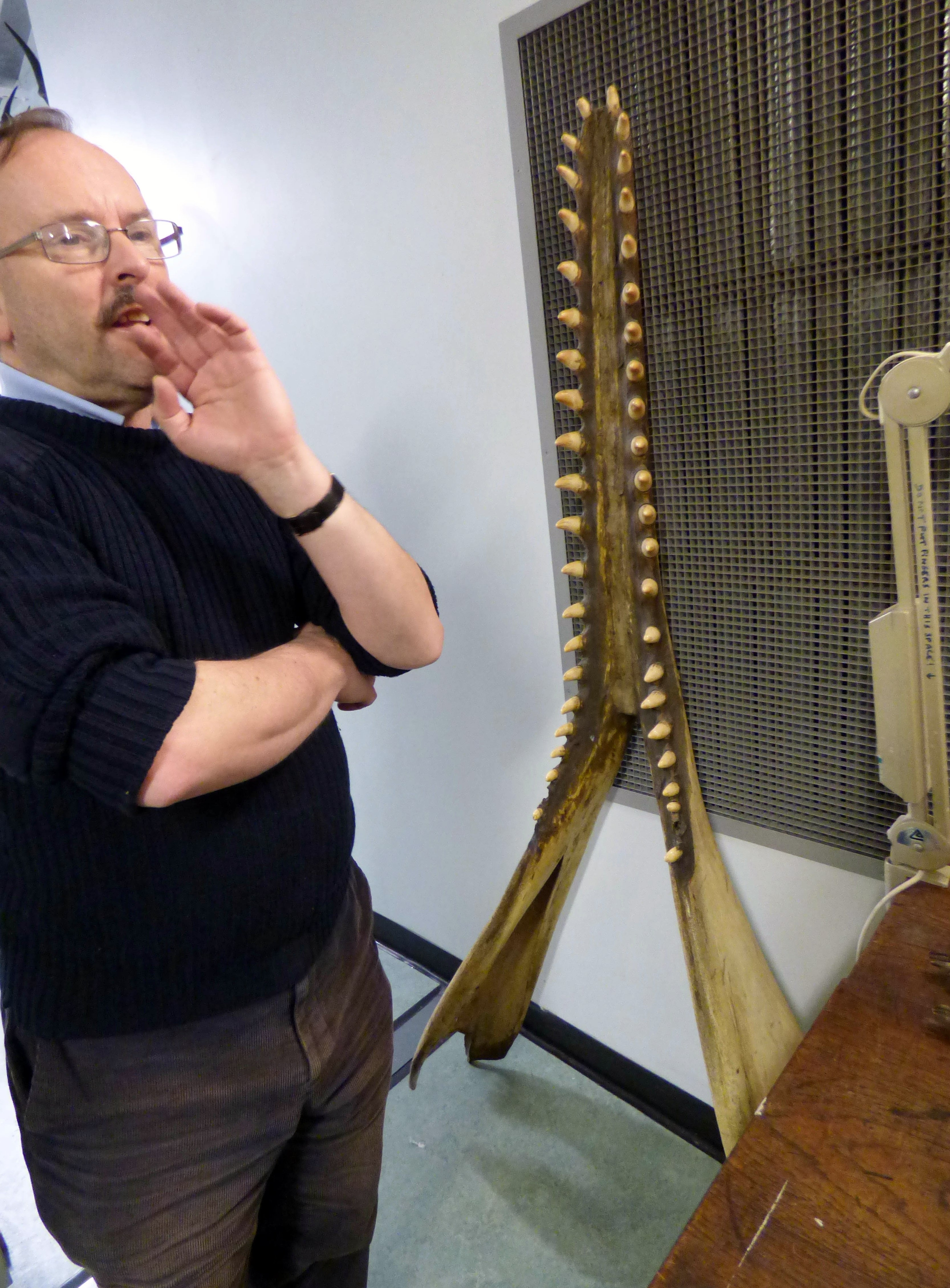 Tony Parker with jawbone of a small sperm whale, MEG behind the scenes tour at Liverpool World Museum, 2018