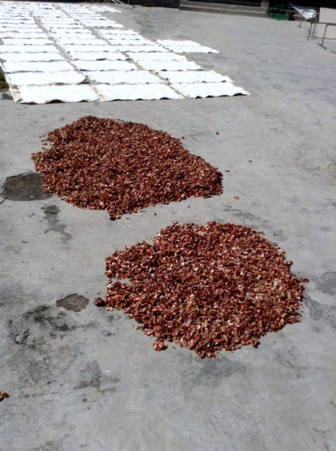 Onion skins drying for dyeing in Sreepur, Bangladesh