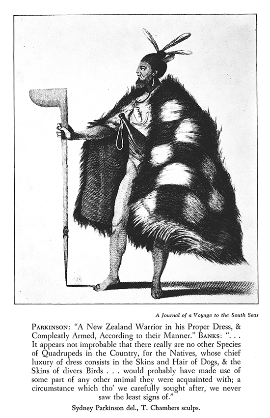 A New Zealand warrior 1769