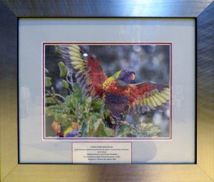 ROSELLA BIRD by Margaret Crichton, hand embroidery, Endeavour exhibition, Liverpool Cathedral, Sept 2018