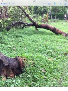 cyclone hits Sreepur causing damage, June 2020